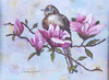 Mockingbird_in_a_magnolia_tree